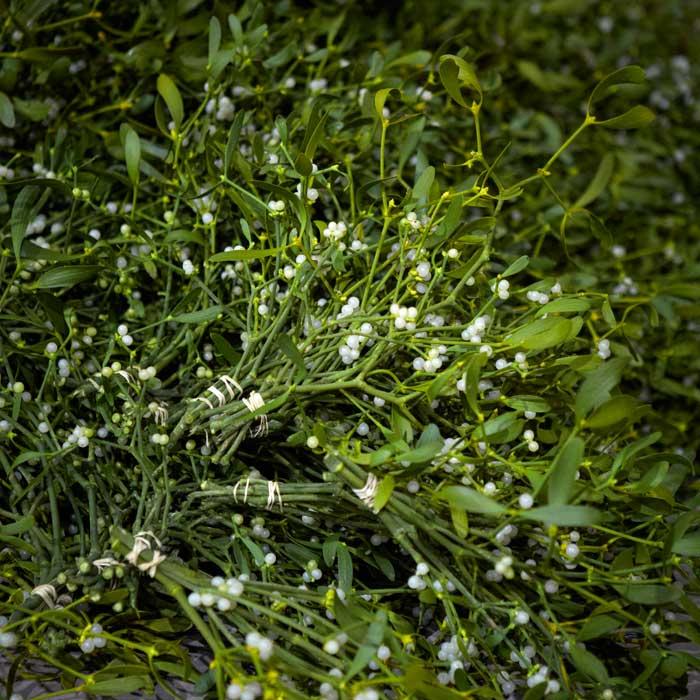 Foliage and Mistletoe